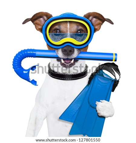 scuba dog with tins snorkel and goggles - stock photo
