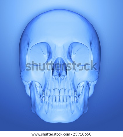 scull 3d illustration