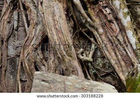 sculpture of angel hidden in tree roots, Ta Phrom - stock photo