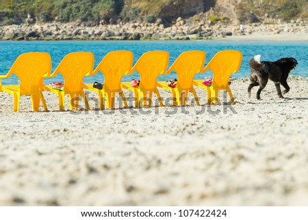 Sea and chairs on the beach and running dog - stock photo
