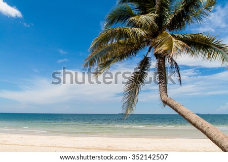 sea and coconut palm.