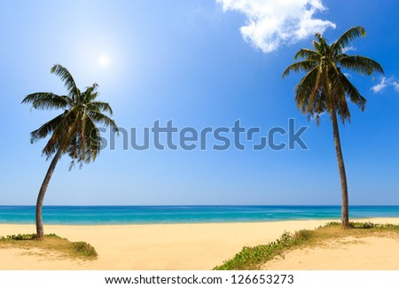 sea and coconut palm tree