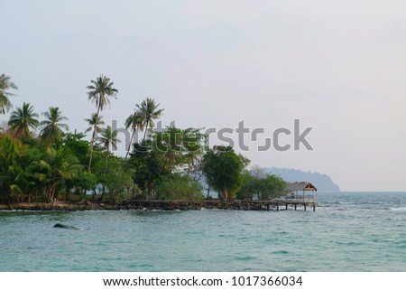 sea and coconut palm trees