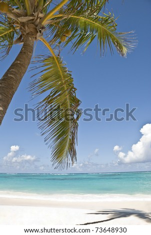 Sea and palm