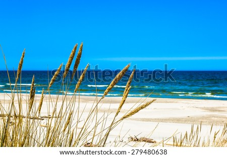 Sea and sandy beach view through grass from dunes, empty beach and blue sky, nature backgrounds, Leba, Baltic Sea, Poland  - stock photo