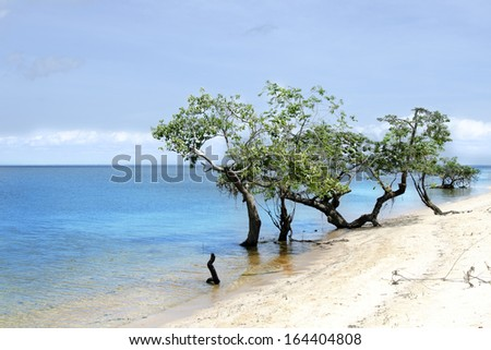 Sea and trees - Brazil beach