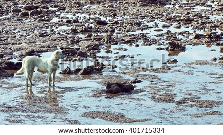Sea At Low Tide - stock photo