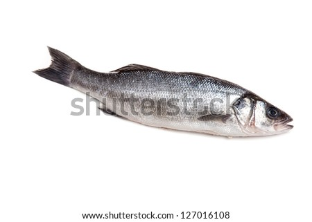 Sea bass fish isolated on a white studio background.