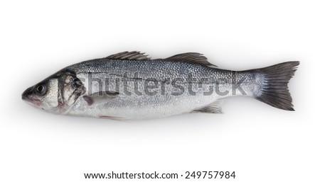 Sea-bass isolated on white background - stock photo