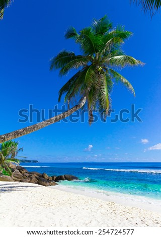 Sea Beach Palm
