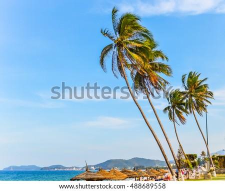 Sea beach palms Vietnam Nha Trang