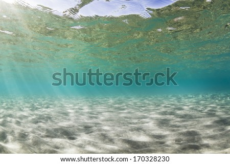 Sea bed background underwater view. - stock photo