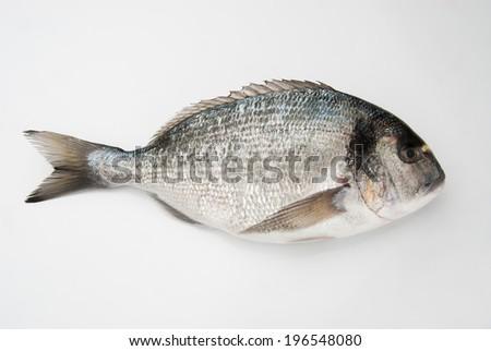 Sea bream - stock photo