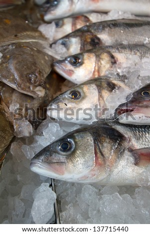 Sea bream for sale at fresh fish market. Selective focus. - stock photo