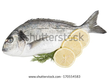 sea bream with lemon and dill decoration. isolated on white background.