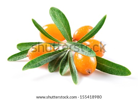 Sea buckthorn berries - stock photo
