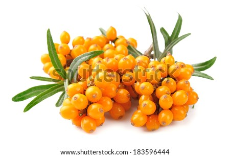 Sea buckthorn berries branch on a white background - stock photo