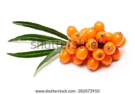 Sea buckthorn berries branch with leaves isolated on white background - stock photo