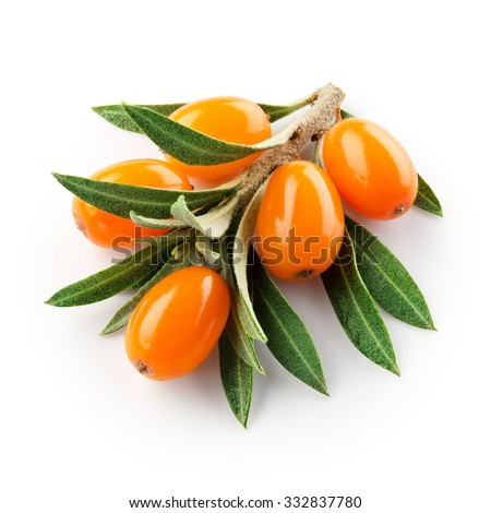 sea buckthorn branch isolated on the white. With clipping path. - stock photo