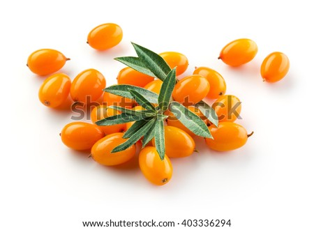 Sea buckthorn isolated on the white. - stock photo