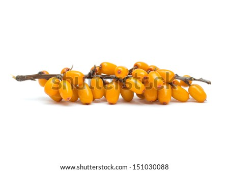 sea buckthorn isolated on white background - stock photo