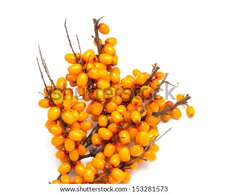 sea buckthorn isolated on white background
