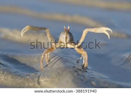 Sea crab on the beach of a tropical lake - stock photo
