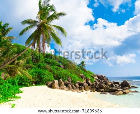 Sea Dream Palms - stock photo