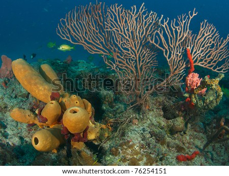 Sea Fan and Sponges on a coral reef.