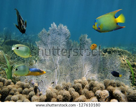 Sea fan in a coral reef with colorful tropical fish - stock photo