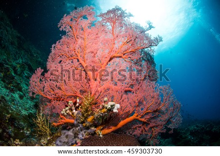 Sea fan under the sea