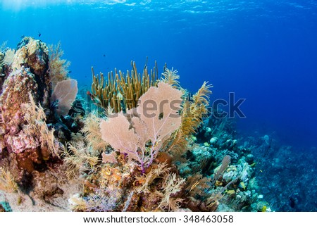 Sea fans and coral on a tropical reef - stock photo