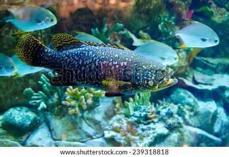 sea �¢??�¢??fish - stock photo