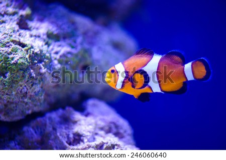 sea fish - stock photo