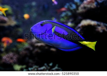 Sea fish in aquarium