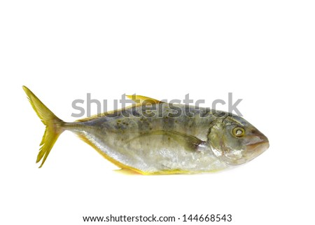 Sea fish  isolated on white background