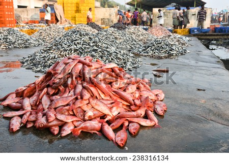 Sea food. Fish market in India. Heap of Raw Red snapper fish for sale.pelagic fish - stock photo