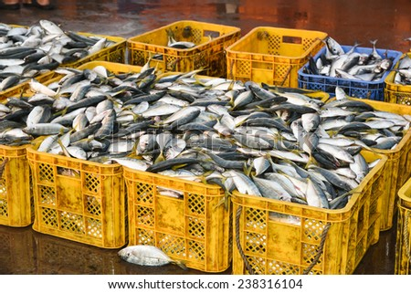 Sea food. Fish market in India. Raw Mackerel fish for sale. - stock photo
