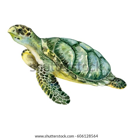 Turtle Stock Images Royalty Free &amp Vectors