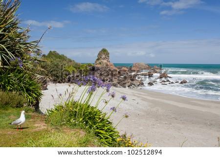 Sea gull and sandy beach of Tasman Sea at West Coast of South Island of New Zealand - stock photo