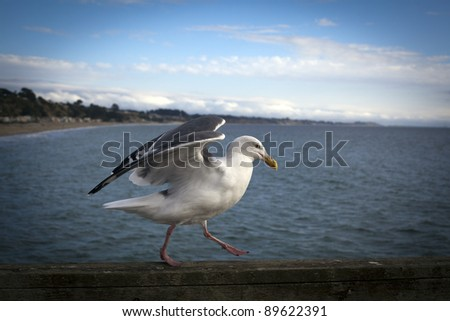 Sea Gull balancing on pier in California! - stock photo