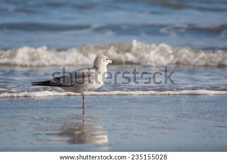 Sea gull bird standing on the sand beach - stock photo