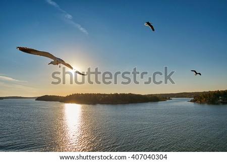 Sea Gull flying into sunrays at Sea - stock photo