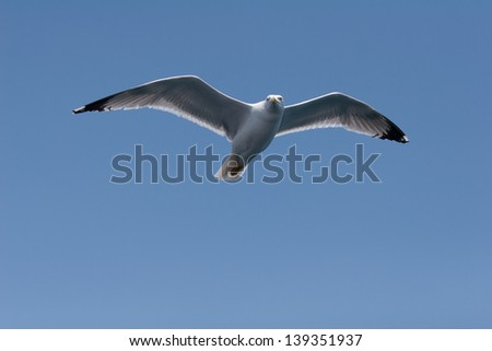 Sea gull hovering over copy space. Ideal for your text.