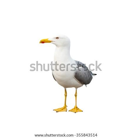 Sea gull, isolated on white background - stock photo