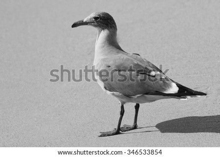 Sea gull on sandy beach during a sunny vacation day