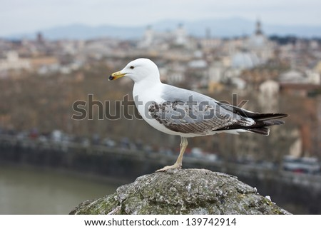 Sea gull on the roof of Castel S. Angelo over Rome background