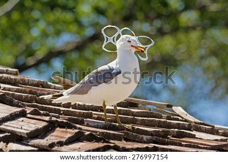 sea gull trapped in plastic six pack holder pollution - stock photo
