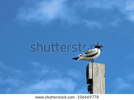 Sea gull watching for food opportunities while sitting on a pier post located in the outer banks of NC. - stock photo