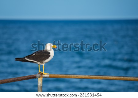 Sea Gull watching the ocean - stock photo